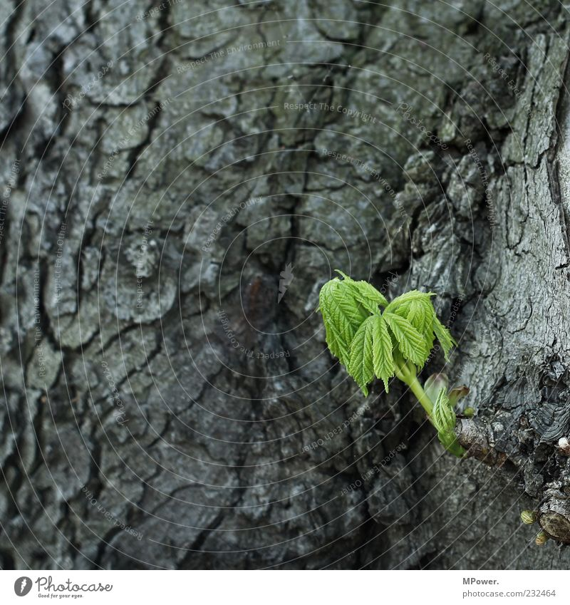 ... Environment Nature Plant Tree Leaf Wood Colour Growth Tree bark Little tree Green Gray Sprout Flourish Old 3 Germinate Colour photo Exterior shot Close-up