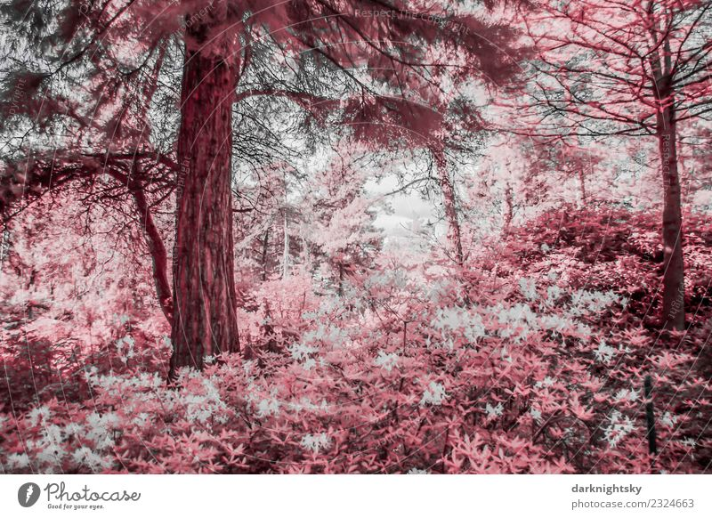 Scenic view of a conifer rhododendron forest in infrared colors. Environment Nature Landscape Plant Sky Tree Flower Bushes Leaf Foliage plant Wild plant Exotic
