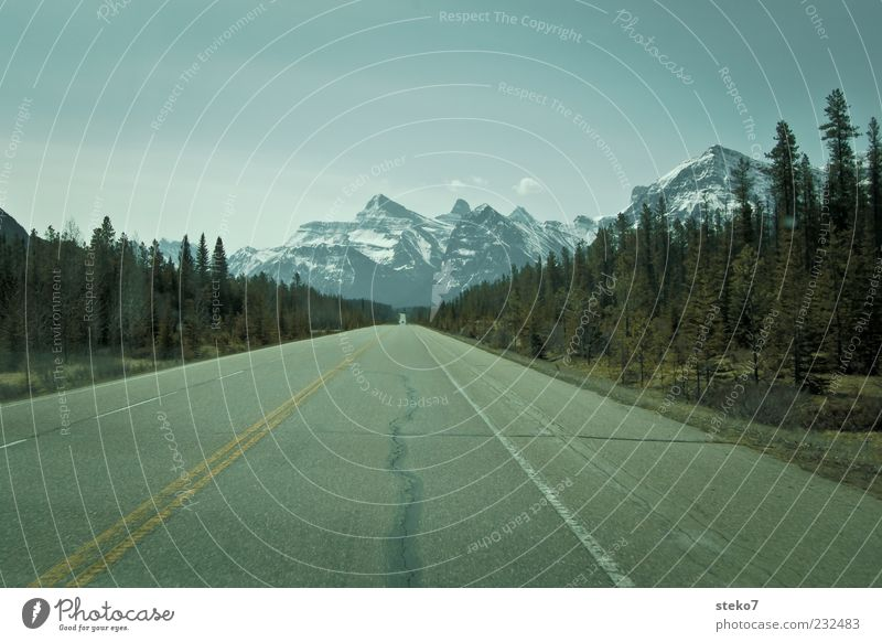 Tree Loneliness Far-off places Street Mountain Freedom Horizon Beginning Driving Asphalt Wanderlust Canada Snowcapped peak Cloudless sky Roadside Lane markings