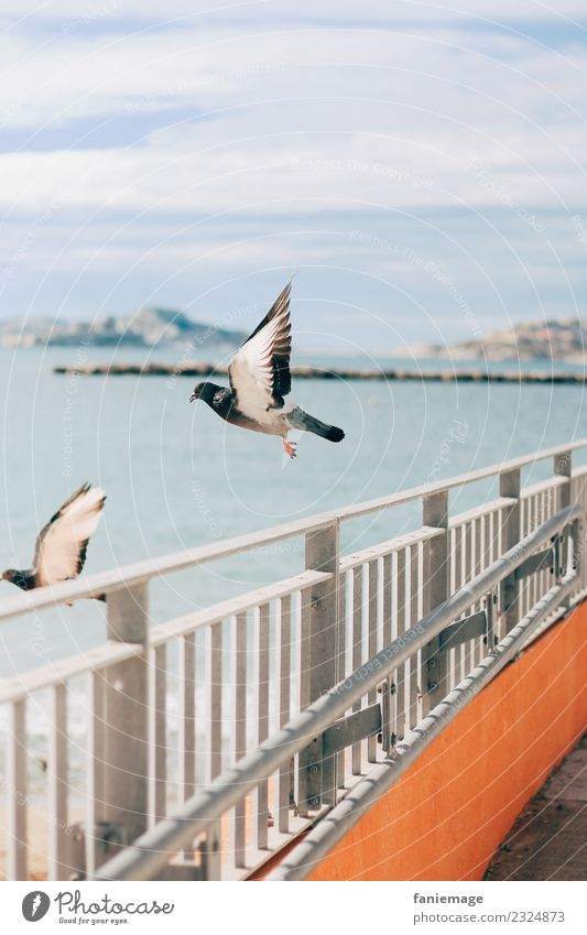 Pigeon taking off Animal Bird 2 Flying Airplane takeoff Marseille Iles du Frioul Fence Port City Ocean Wing Splay Elegant Peace Town City life Mountain Harbour
