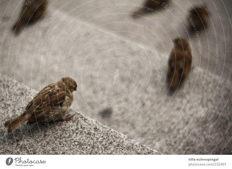 Animal Stone Bird Wait Small Sit Observe Wild animal Stairs Sparrow Free-living Stone steps