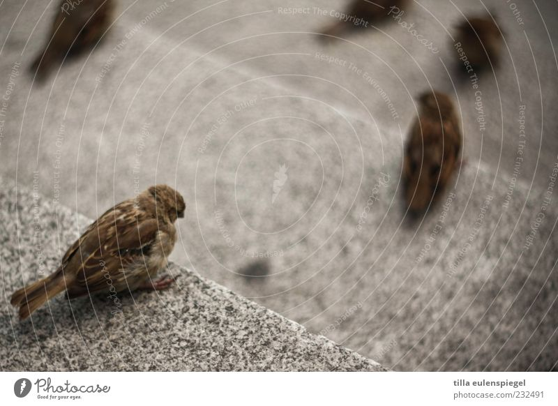 BirdPerspective Animal Wild animal 1 Stone Observe Wait Sparrow Bird's-eye view Stone steps Small Blur Sit Free-living Deserted Full-length Rear view Stairs