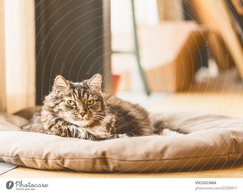 Old cat lies on blanket and looks into camera Lifestyle Living or residing Room Animal Pet Cat 1 Love of animals Design Ground Ceiling Colour photo