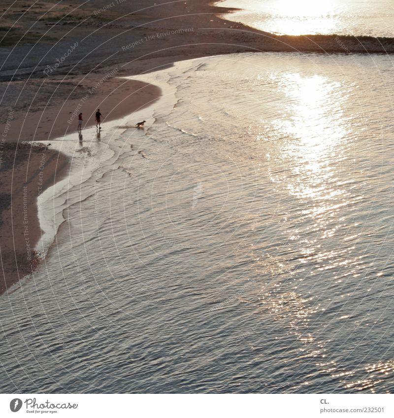 beach walk Human being Masculine 2 Nature Landscape Sand Water Sunrise Sunset Sunlight Summer Beautiful weather Warmth Waves Coast River bank Beach Animal Dog 1