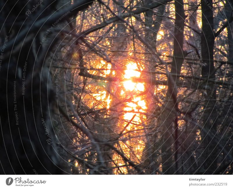 Sun in the forest Nature Sunlight Beautiful weather Tree Forest Wild Colour photo Exterior shot Deserted Back-light Branch Twig
