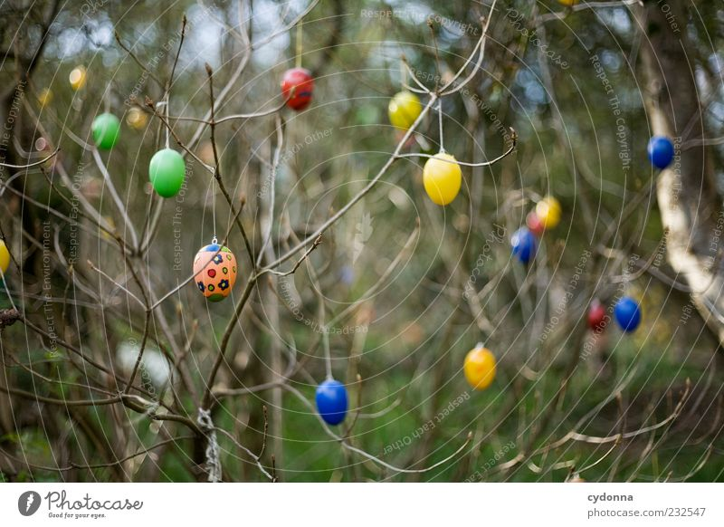 In love with detail Lifestyle Style Design Freedom Feasts & Celebrations Easter Environment Nature Spring Tree Bushes Garden Uniqueness Idea Idyll Inspiration