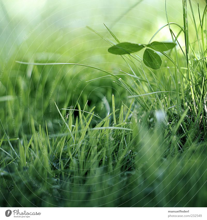 Nature Green Plant Summer Leaf Relaxation Meadow Environment Life Grass Garden Happy Spring Contentment Earth Esthetic