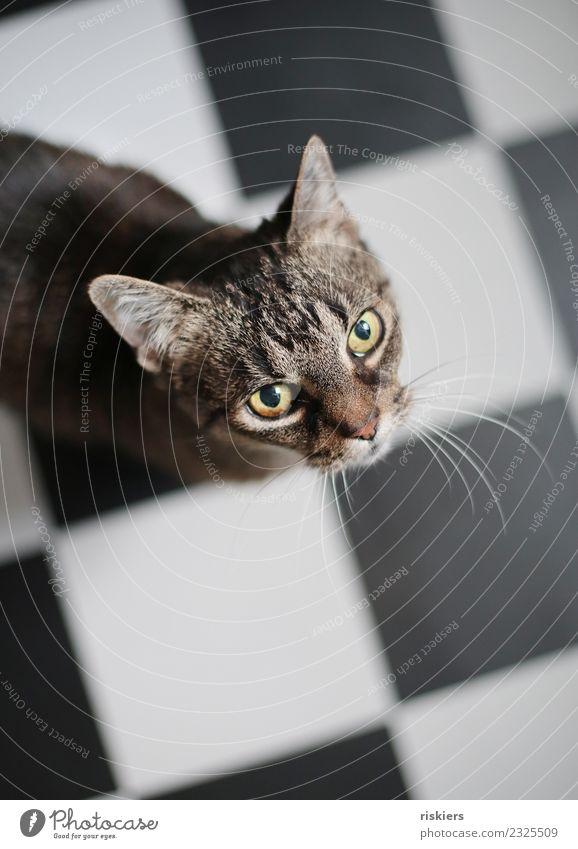 Cat Beautiful Animal Wait Cute Observe Curiosity Kitchen Pet Tile
