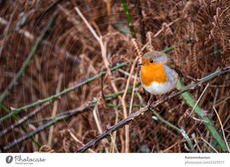 Nature Beautiful Animal Life Lanes & trails Small Bird Brown Orange Dream Free Wild animal Idyll To enjoy Joie de vivre (Vitality) Wait