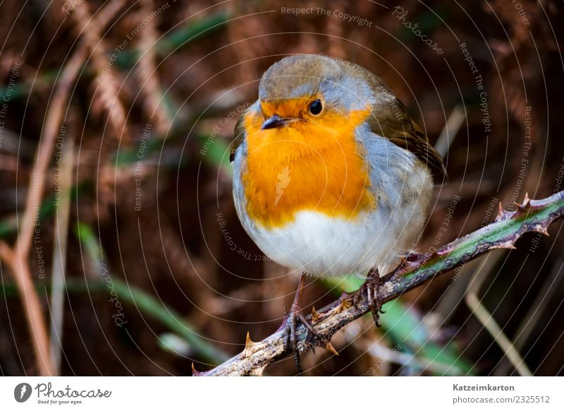 Nature Beautiful Red Animal Environment Love Small Bird Brown Flying Free Authentic Joie de vivre (Vitality) Fantastic Wing Cute