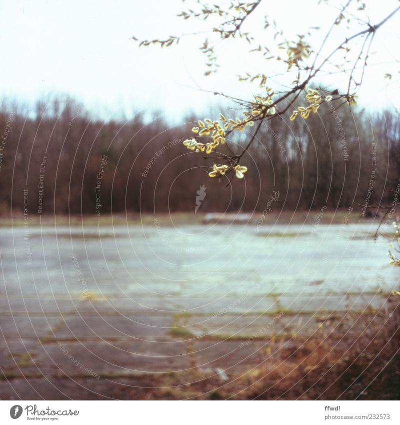 Nature Old Tree Plant Leaf Loneliness Calm Environment Spring Wet Places Change Bushes Transience Branch Decline