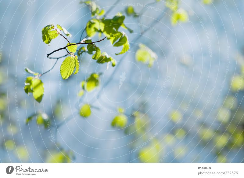 Nature Blue Green Beautiful Leaf Spring Bright Growth Spring fever Twigs and branches Spring colours Light green Natural growth