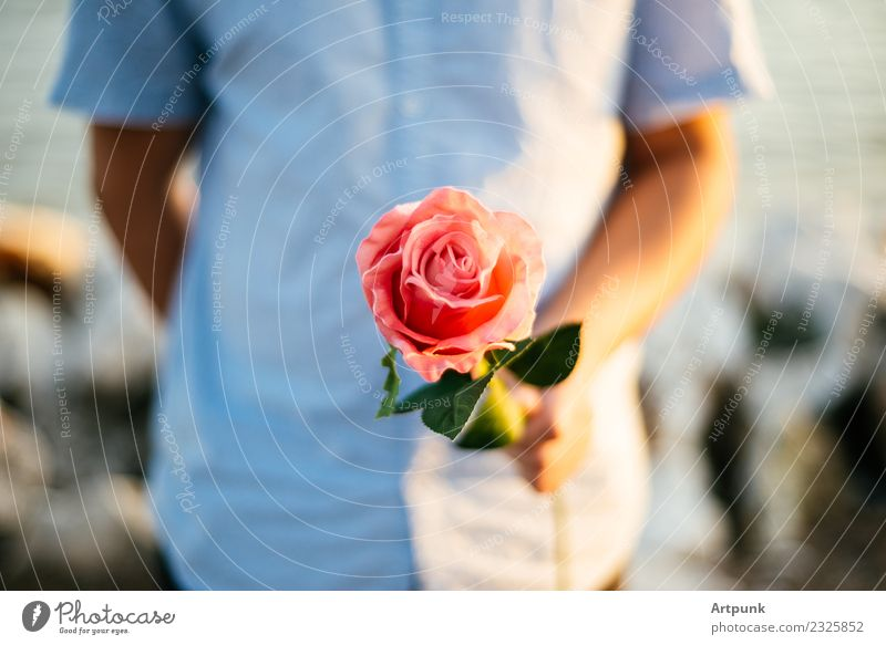 Young man offering a rose Rose Pink Leaf Shirt Close-up Valentine's Day Love Romance Couple Hand Arm Shallow depth of field Flower Red