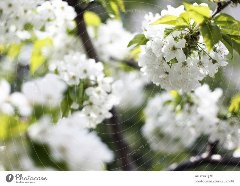 Nature White Green Tree Plant Leaf Environment Blossom Spring Climate Esthetic Blossoming Bud Cherry blossom Structures and shapes Agricultural crop