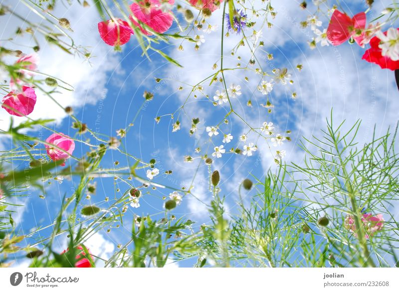 Rise high. Life Well-being Senses Fragrance Freedom Summer Sun Nature Plant Sky Clouds Sunlight Spring Beautiful weather Warmth Flower Grass Leaf Blossom Garden