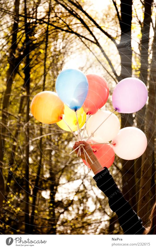 Human being Nature Hand Tree Sun Summer Forest Environment Movement Spring Feasts & Celebrations Arm Decoration Balloon Beautiful weather Joie de vivre (Vitality)