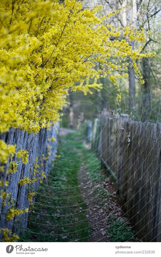 Nature Beautiful Loneliness Calm Forest Yellow Environment Meadow Life Emotions Lanes & trails Garden Spring Dream Bushes Uniqueness