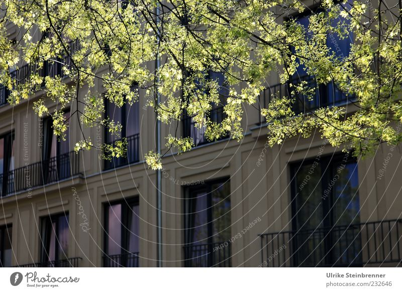Spring in the city Nature Plant Beautiful weather Tree Leaf Branch House (Residential Structure) Places Manmade structures Building Architecture Facade Balcony