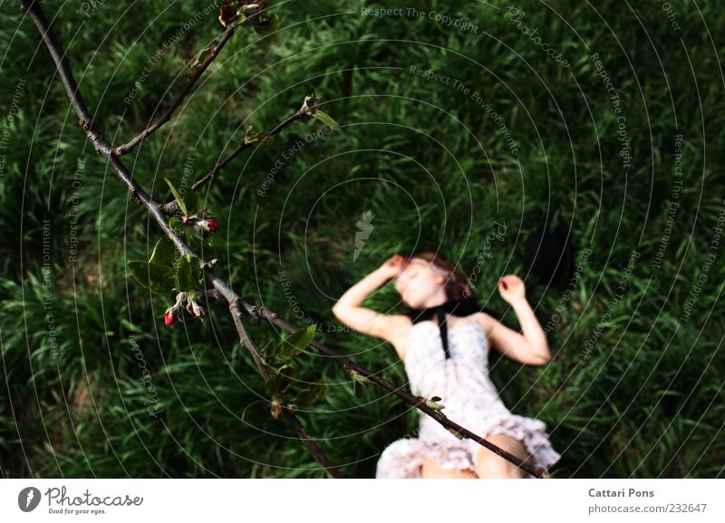 Travel the world and the seven seas Feminine Girl Young woman Youth (Young adults) 1 Human being Plant Grass Branch Bud Dress Bow Hat Lie Sleep Dream Thin Green