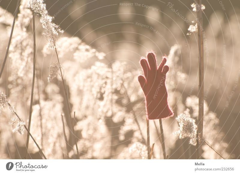 Hands up Environment Plant Sunlight Grass blossom Gloves Transience Lose Forget Doomed Discovery Colour photo Exterior shot Deserted Day Evening Back-light 1