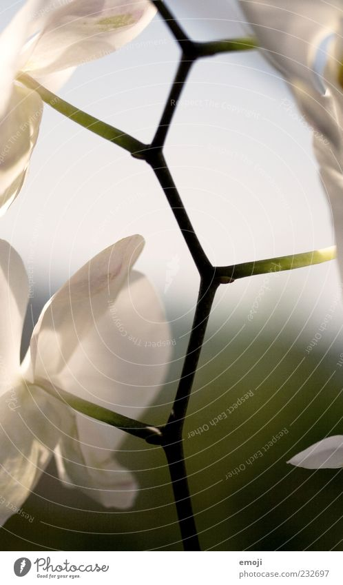 intertwined Nature Plant Spring Summer Pot plant Orchid Stalk Synthesis Blossom leave Colour photo Exterior shot Day Light Shallow depth of field Sunlight