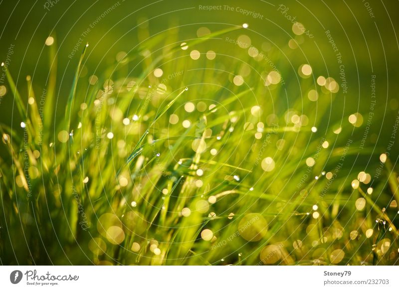 Nature Green Plant Meadow Grass Glittering Wet Drops of water Beautiful weather Dew Blade of grass Water Copy Space Lens flare Light