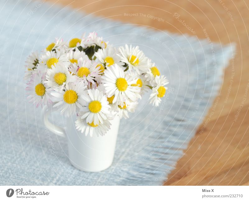 Blue White Beautiful Summer Flower Small Blossom Spring Decoration Kitsch Blossoming Bouquet Fragrance Daisy Vase Tablecloth