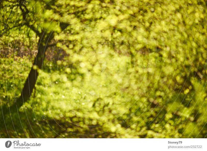 Nature Green Tree Plant Leaf Spring Wild Fresh Illuminate Beautiful weather Seasons Swirl Spring fever Environment Morning