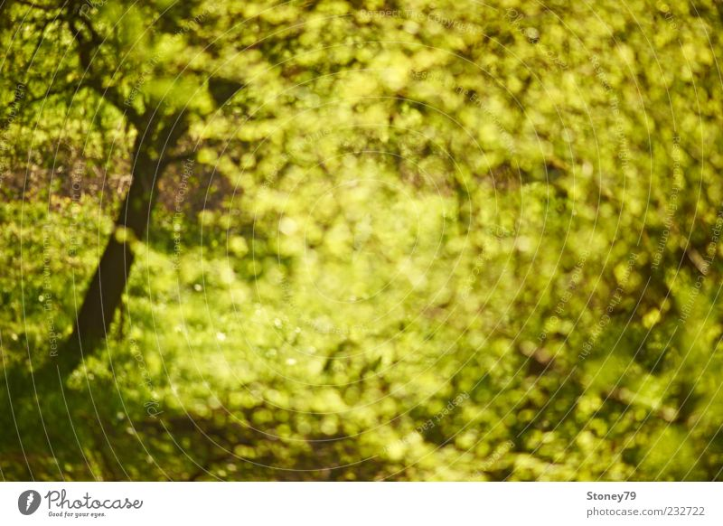 spring frenzy Nature Plant Spring Beautiful weather Tree Leaf Illuminate Fresh Wild Green Spring fever Swirl Seasons Colour photo Exterior shot Abstract