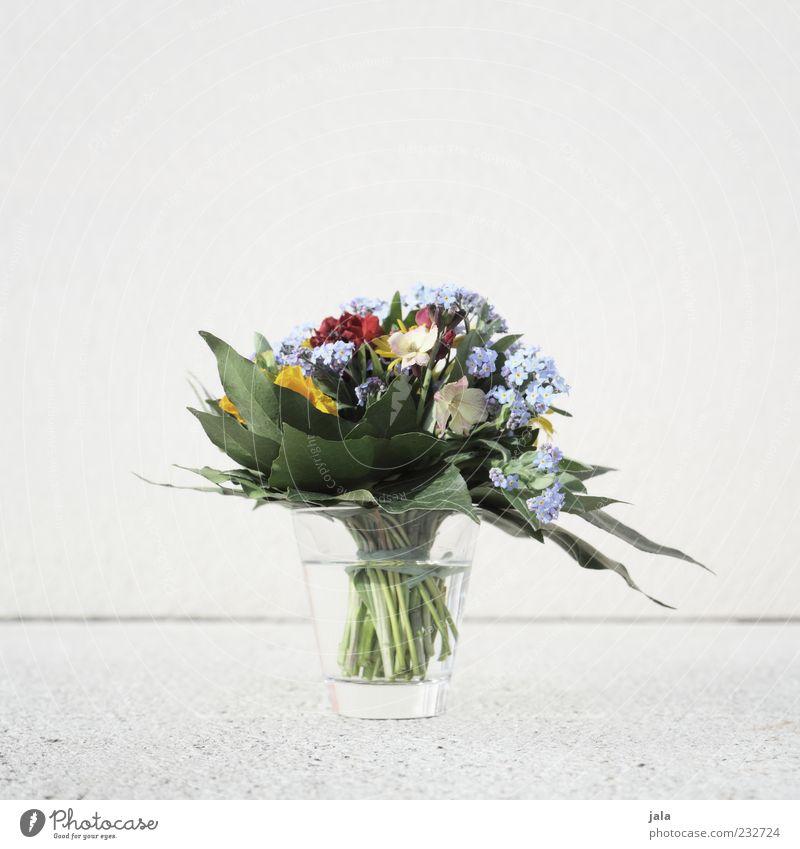 Plant Flower Glass Decoration Bouquet Vase Spring fever
