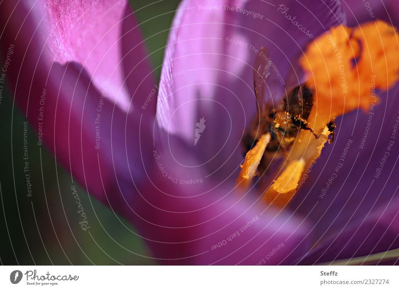 Nature Plant Beautiful Flower Environment Blossom Spring Legs Garden Orange Pink Blossoming Wing To hold on Violet Insect