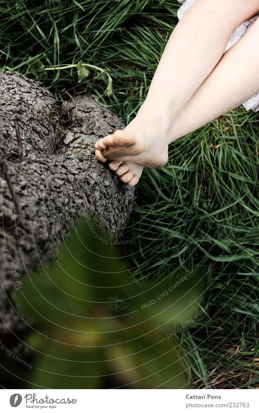 Nature Green Tree Summer Plant Leaf Calm Relaxation Grass Wood Legs Feet Lie Dirty Thin Serene