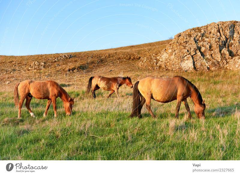 Herd of wild grazing horses on the field Summer Environment Nature Landscape Plant Animal Sky Horizon Sunrise Sunset Sunlight Spring Autumn Beautiful weather