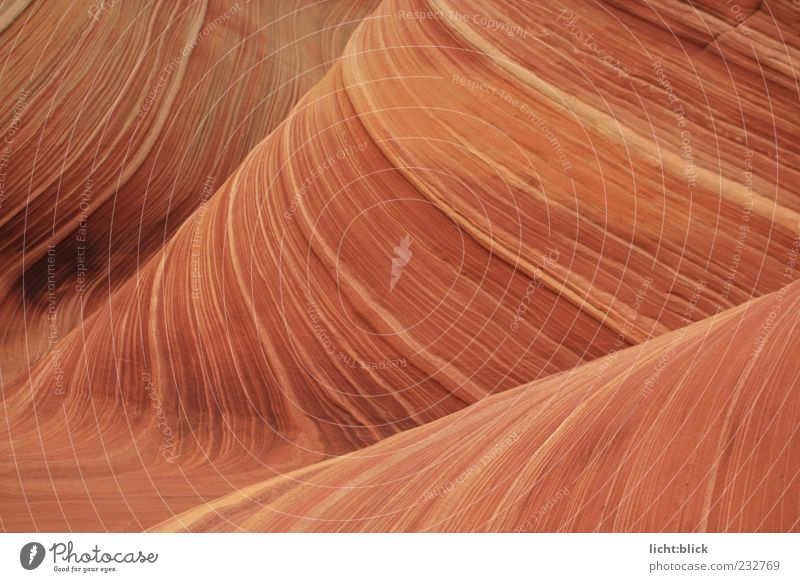 The Wave Nature Hill Rock Canyon Waves Coyote Buttes the wave Arizona Stone Infinity Dry Brown Red Movement Rock formation Sandstone Colour photo Exterior shot