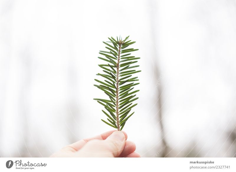 fir branch hand Harmonious Well-being Contentment Relaxation Calm Meditation Vacation & Travel Trip Adventure Far-off places Freedom Expedition Camping Hiking
