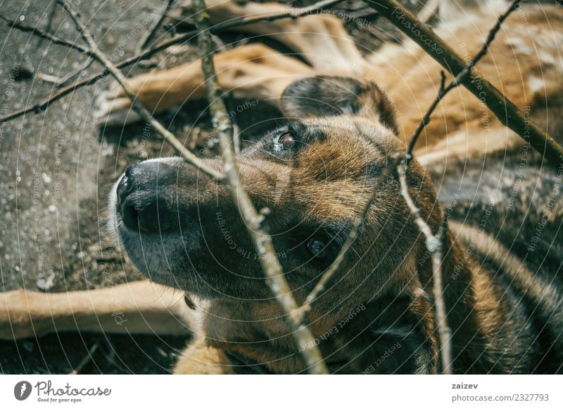dog without breed looking at the camera Woman Dog Old Summer Beautiful Animal Loneliness Dark Face Adults Sadness Wood Brown Above Friendship Earth