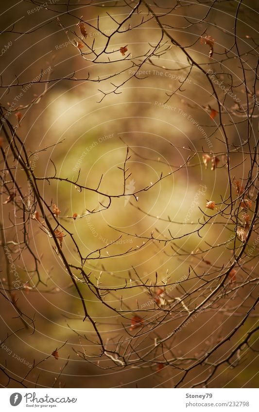 twigs Nature Plant Tree Leaf Brown Calm Longing Twig Vista Frame Delicate Colour photo Subdued colour Exterior shot Detail Deserted Copy Space top