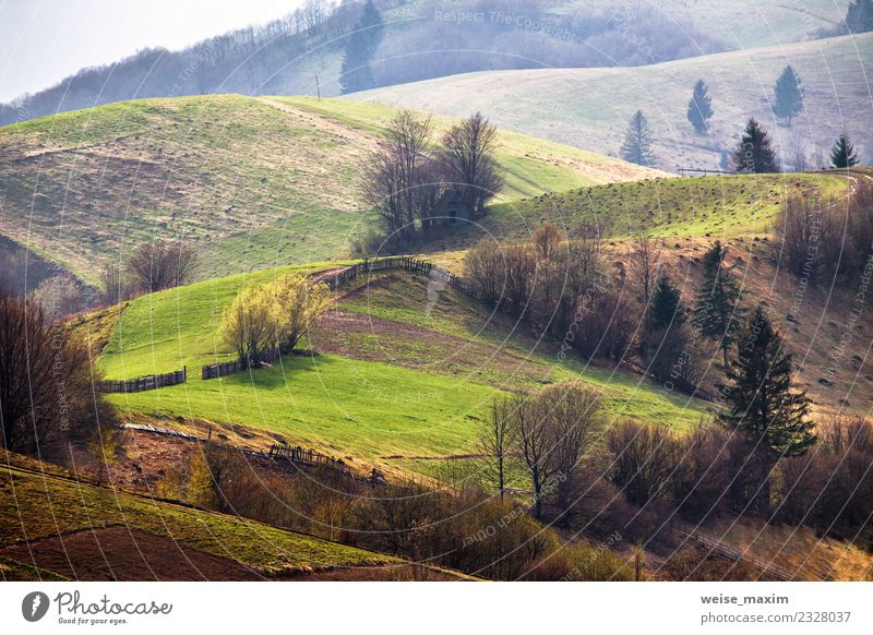 Green hills in mountain valley. Spring landscape Nature Vacation & Travel Plant Summer Landscape Tree Far-off places Forest Mountain Environment Meadow Natural