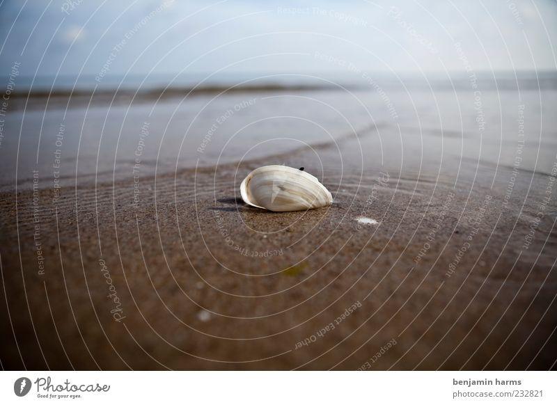 Water Ocean Beach Animal Calm Far-off places Landscape Sand Coast Waves Beautiful weather Baltic Sea Mussel Sandy beach