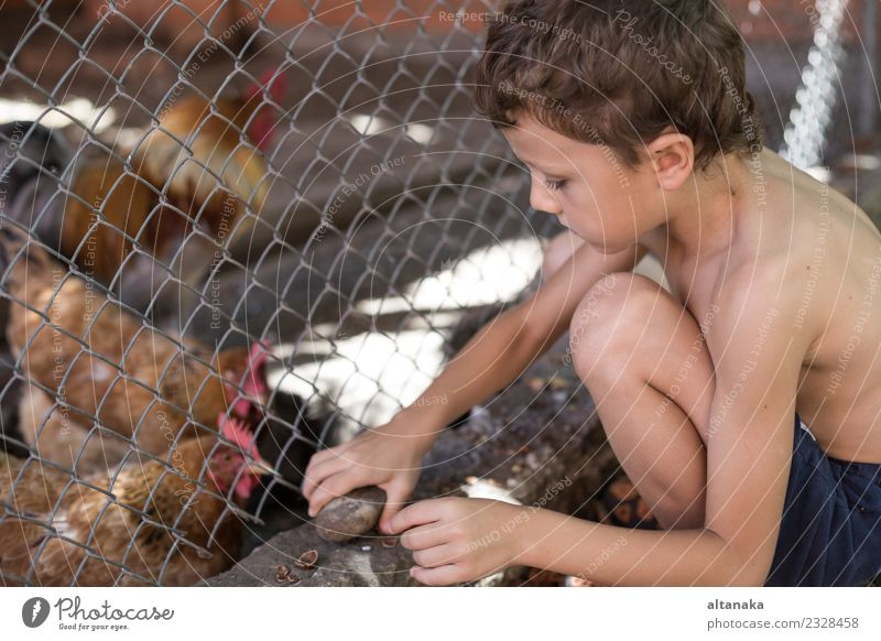 Little boy sitting with farm chickens Joy Happy Beautiful Playing Summer House (Residential Structure) Child Human being Baby Boy (child) Man Adults Infancy