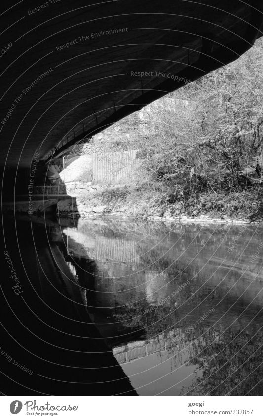 Water Plant Landscape Concrete Bridge Gloomy Bushes River bank Black & white photo Surface of water Water reflection Under a bridge