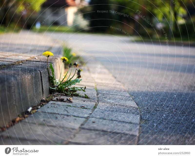 Nature Tree Plant Flower Loneliness Yellow Street Environment Life Grass Spring Exceptional Change Asphalt Sidewalk Stalk