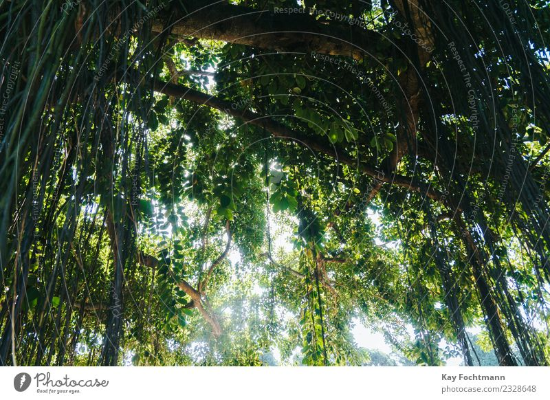 Atlantic Rainforest in Brazil Harmonious Relaxation Vacation & Travel Tourism Trip Adventure Expedition Summer Summer vacation Sun Hiking Environment Nature