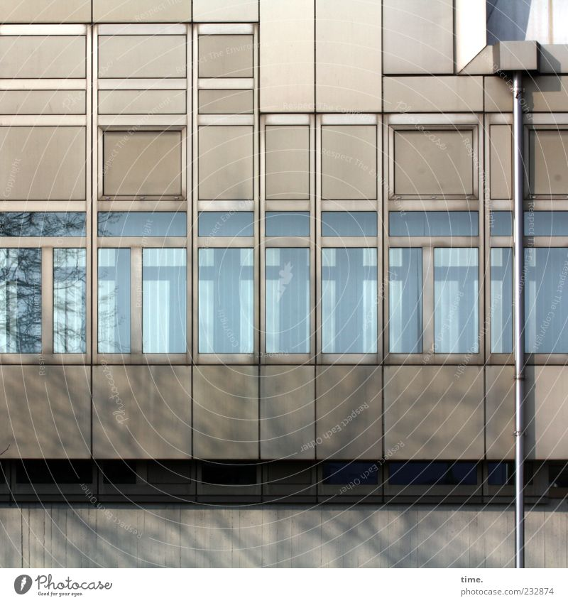 Berlin grey with downpipe House (Residential Structure) Facade Window Sharp-edged Downspout Window pane Rectangle Twig Glazed facade Copy Space top Colour photo