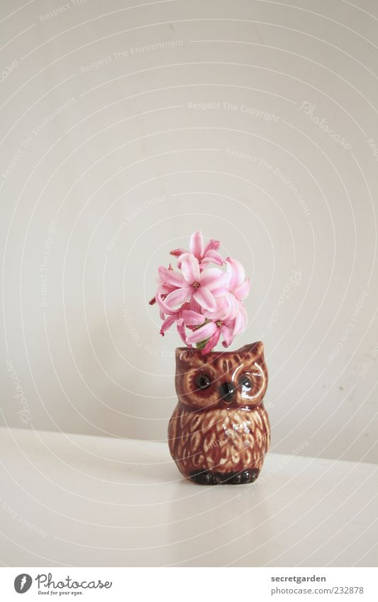 White Plant Wall (building) Small Blossom Brown Feasts & Celebrations Flat (apartment) Pink Esthetic Table Decoration Stand Cute Kitsch Blossoming