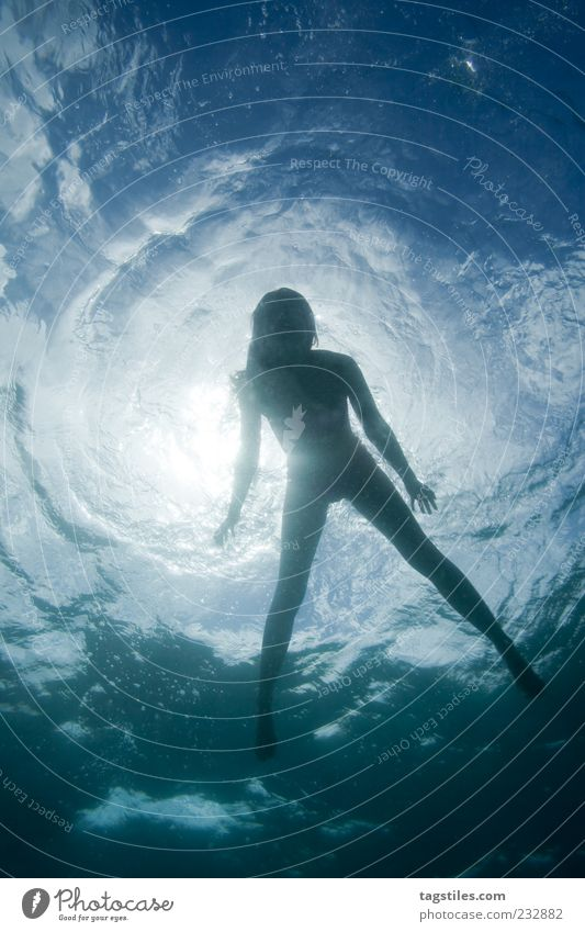 Superficial Water Surface of water Woman Swimming & Bathing Float in the water Sun Silhouette Contour Schematic Hover Sunlight Sunbeam Vacation & Travel