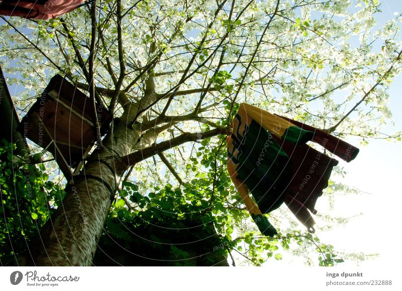 Sky Nature Tree Plant Calm Wood Spring Fresh Shirt Fruit trees Suspended Spring fever Birdhouse Cherry tree