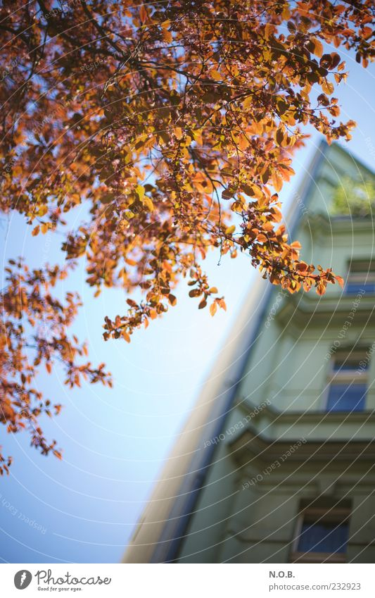 Tree House (Residential Structure) Spring Facade Esthetic Beautiful weather Building