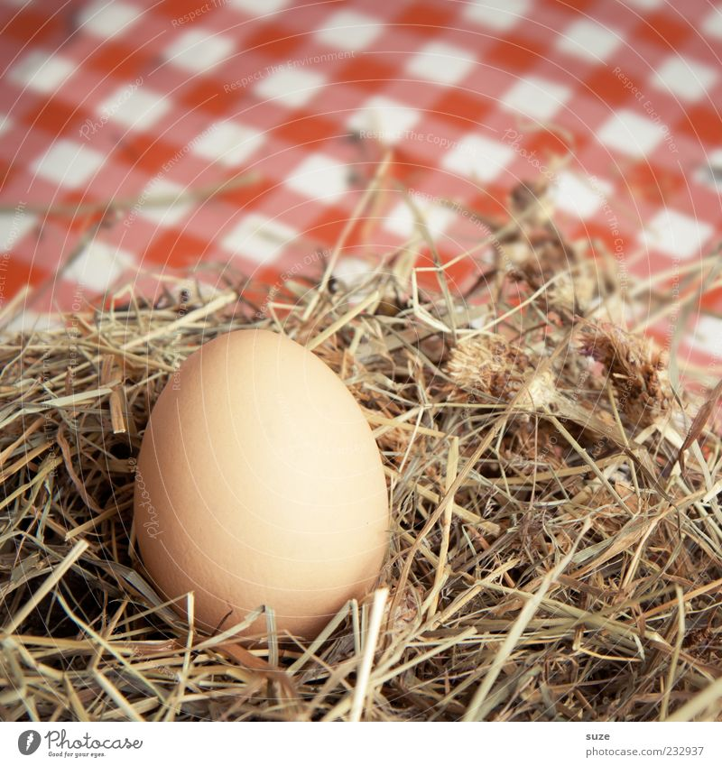 country bumpkin Food Egg Hen's egg Organic produce Vegetarian diet Easter Wait Nest Straw Hay Country life Fresh Checkered Colour photo Multicoloured