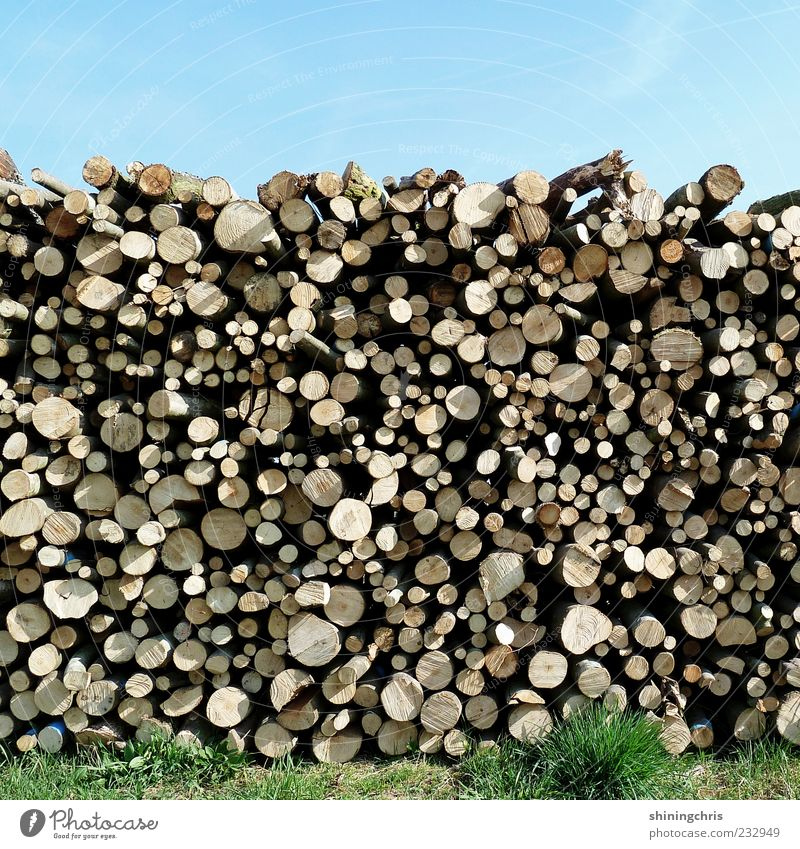 Wood in front of the hut Nature Sky Cloudless sky Beautiful weather Grass Tree trunk Heat Round Log Stack Forestry Sunlight Deserted Shadow Annual ring